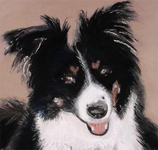 pet portrait detail